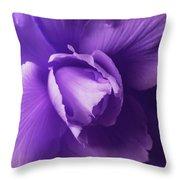 Purple Begonia Flower Throw Pillow by Jennie Marie Schell