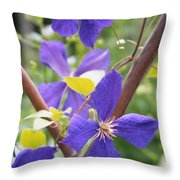 Purple Clematis Clinging On A Fence Throw Pillow