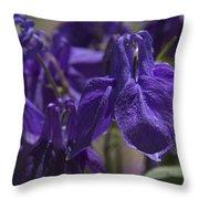 Purple Colimbine 1 Throw Pillow