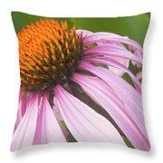 Purple Cone Flower Echinacea Throw Pillow