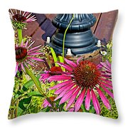 Purple Coneflowers By Former Railroad Depot In Pipestone-minnesota Throw Pillow