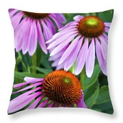 Purple Coneflowers - D007649a Throw Pillow