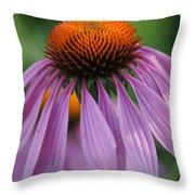 Purple Cornflower Throw Pillow