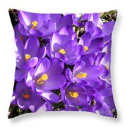 Purple Crocus Spring Welcome Throw Pillow