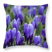 Purple Crocuses Throw Pillow