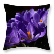 Purple Crocuses On A Spring Day Throw Pillow