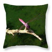 Purple Dragonfly Throw Pillow by Ella Char