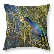 Purple Gallinule 2 Throw Pillow