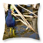 Purple Gallinule 4 Throw Pillow
