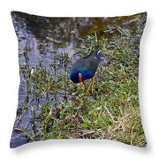 Purple Gallinule Throw Pillow