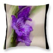 Purple Gladiolus Throw Pillow