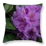 Purple Glory Throw Pillow