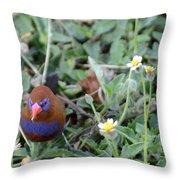 Purple Grenadier  Throw Pillow