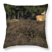 Purple Heather In The Background A Female Deer Netherlands Throw Pillow