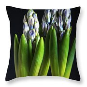 Purple Hyacinth Ready For Spring. Throw Pillow