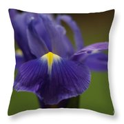Purple Iris 6 Throw Pillow