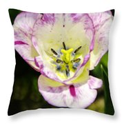 Purple Lace Tulip Time Throw Pillow