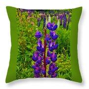 Purple Lupine On Campobello Island-new Brunswick  Throw Pillow