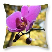 Purple Orchid In September Sun Throw Pillow