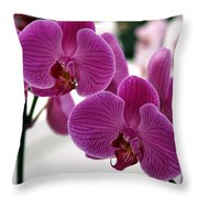 Royal Orchids  Throw Pillow