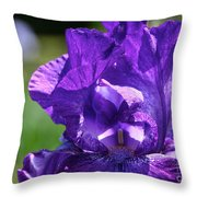 Purple Pandora Throw Pillow