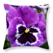 Purple Pansy Close Up Throw Pillow