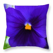Purple Pansy Closeup Throw Pillow