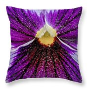 Purple Pansy In Pollen Throw Pillow