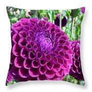 Purple Perfection Dahlia Flower Throw Pillow