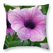 Purple Petunia  Throw Pillow