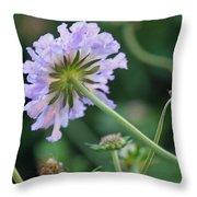Purple Pincushion Flower Throw Pillow