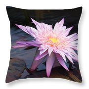 Purple Pink Yellow Waterlily... Throw Pillow