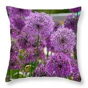 Purple Pom Poms Throw Pillow