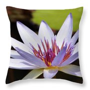 Purple Rhonda Kay Waterlily Above The Pond Throw Pillow