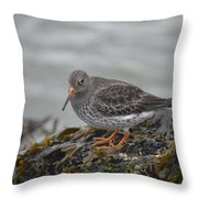 Purple Sandpiper 2 Throw Pillow
