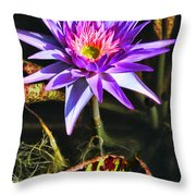 Purple Star Water Lily  By Diana Sainz Throw Pillow