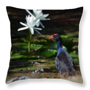 Purple Swamphen Admiring The Water Lilies Throw Pillow