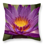 Purple Tropical Water Lily Throw Pillow