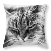 Purring Cat Throw Pillow