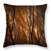 Pussy Willows In The Warm Sunlight Throw Pillow
