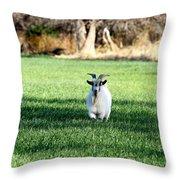 Pygmy Goat Throw Pillow