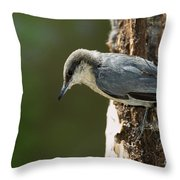 Pygmy Nuthatch Throw Pillow