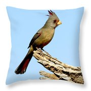 Pyrrhuloxia Cardinalis Sinuatus Female Throw Pillow