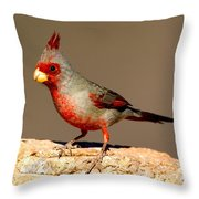 Pyrrhuloxia Cardinalis Sinuatus Male Throw Pillow