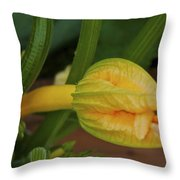 Qcpg 13-008 Throw Pillow