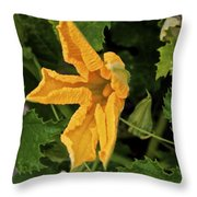 Qcpg 13-014 Throw Pillow
