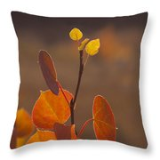 Quaking Aspen In Color   #3749 Throw Pillow