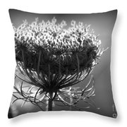 Queen Annes Lace - Bw Throw Pillow
