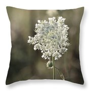 Queen Annes Lace - 3 Throw Pillow