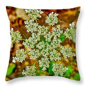 Queen Anne's Lace Or Wild Carrot Near Alamo-michigan Throw Pillow